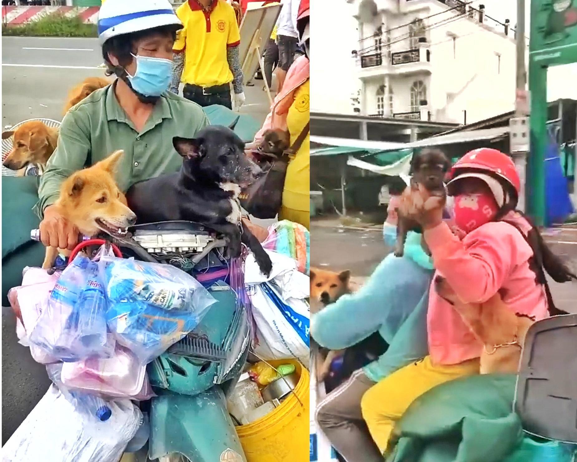 Vụ giết đàn chó ở Cà Mau: dư luận lên án, chính quyền nói 'làm đúng'
